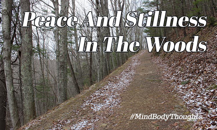Peace and Stillness In The Woods