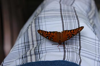 Stronger Together Butterfly