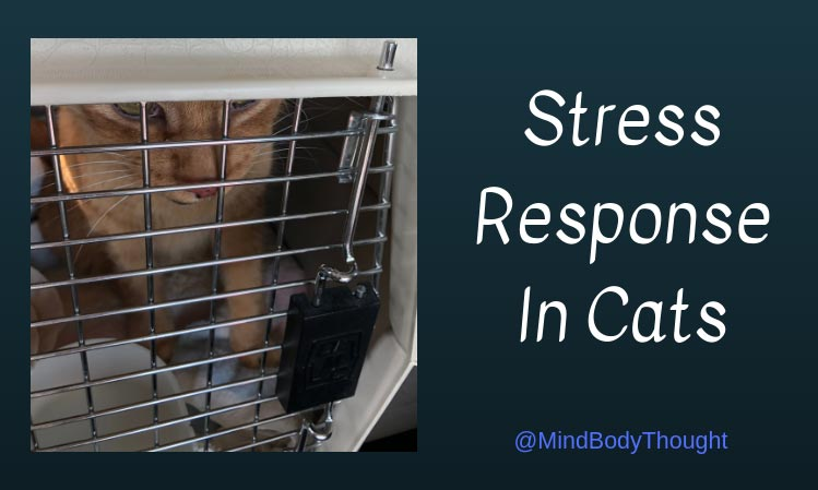 Stress Response In Cats